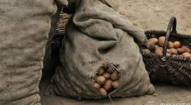 Мешок гнилой картошки