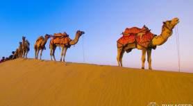 Десять верблюдов