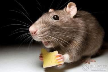 Креативные мыши