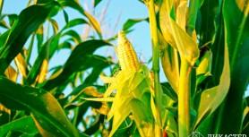 Фермер и конкуренты