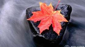 Воробей и листок