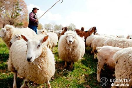 консультант, пастух и овцы - бизнес-притча