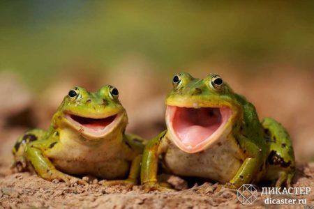 бизнес-притча про лягушек на бревне
