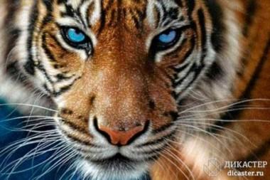 Военачальник и тигр