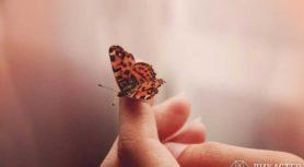 Человек и бабочка