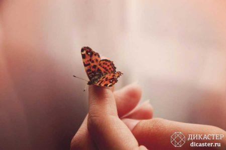 человек и бабочка - бизнес-притча о собственных усилиях