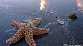Мальчик и морские звезды
