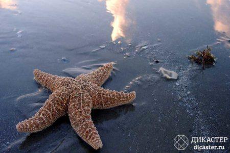 притча - мальчик и морские звезды