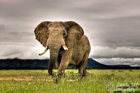 слон, привязанный веревкой - бизнес-притча