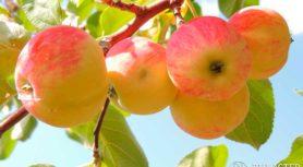 Яблоко, падающее в руку